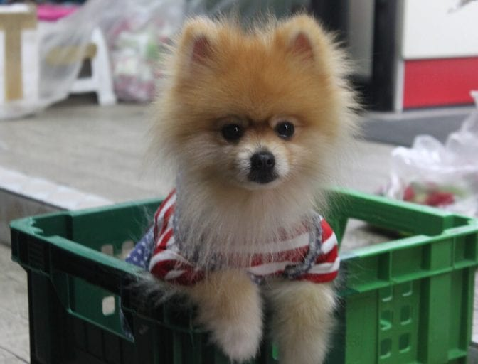 Puppy in milk crate