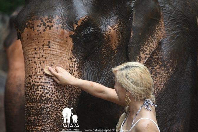 Patara Elephant Farm 10