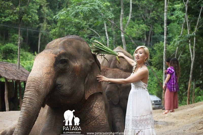 Patara Elephant Farm 13